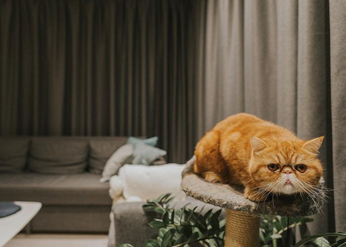 Ciemno szare zasłony rudy kot i karnisze elektryczne